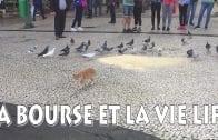 La danse du chat et des pigeons